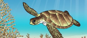 tortue caouaneOK