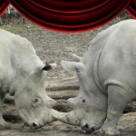 spectacle zoo de lilleOK