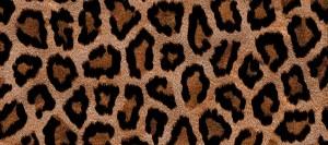 leopardOK